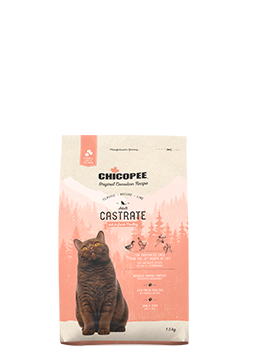 Cat Adult Castrate